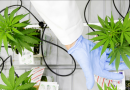 CannaTech Business: Top 20 Startups Making Money Off Weed